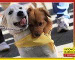 dogday10_03p.jpg