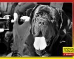 dogday10_07p.jpg